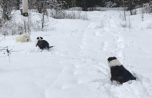 A-walk-up-the-mountain-with-the-dogs