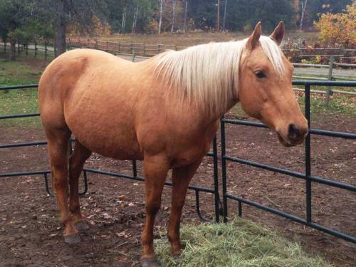 Ella Rose, our new quarterhorse