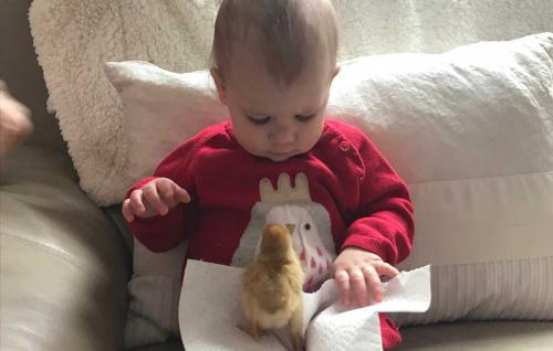Rosie-and-chick