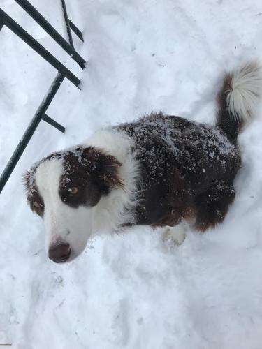 Snowy Leon